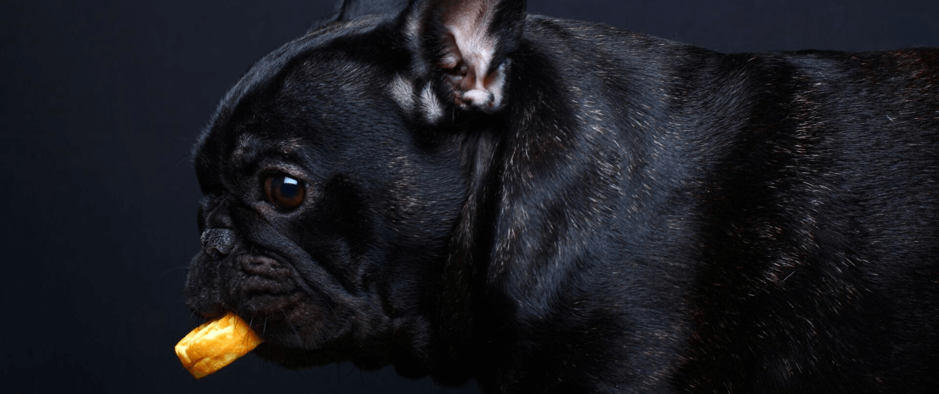 Hundekekse mit Haferflocken