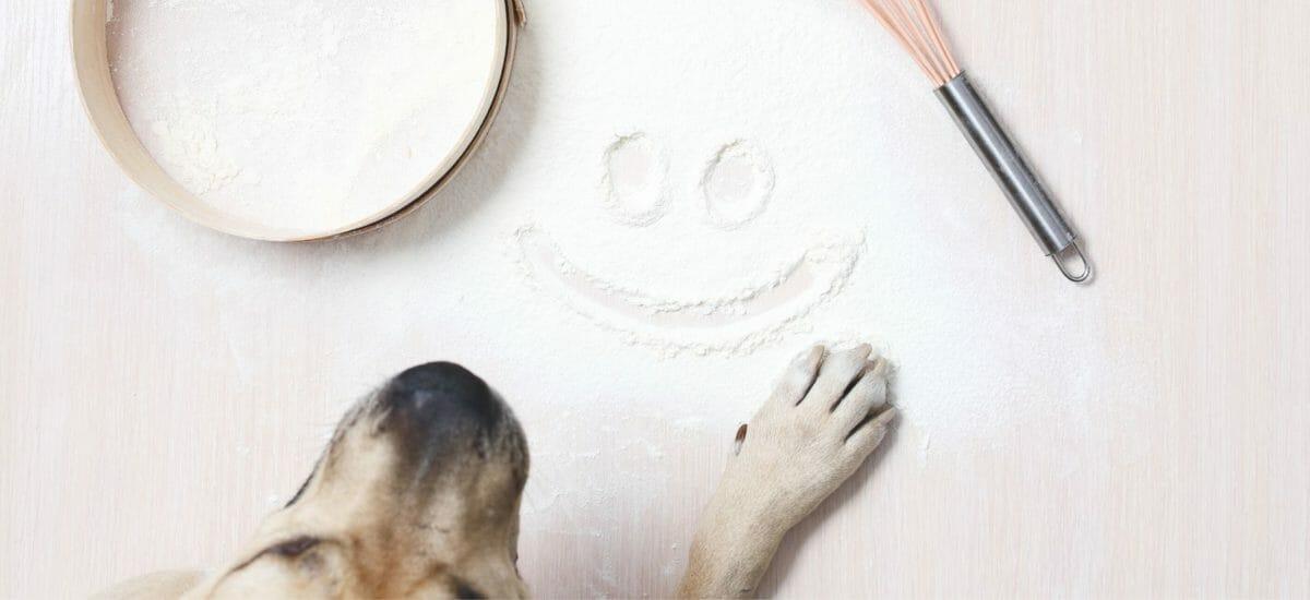 Leberwursttorte – Hundekuchen Rezept